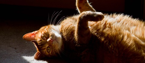 Sunbathing Cat